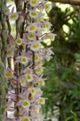 Các loại hoa phong lan rừng tuyệt đẹp