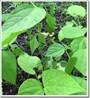 Cách bảo quản hạt đậu xanh khoa học nhất